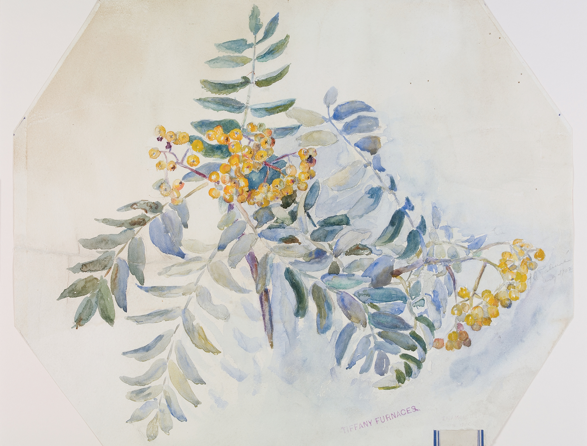 Untitled (watercolor of branches bearing yellow berries) 151, Lillian Palmié, Tiffany Furnaces, Corona, New York, about 1902. CMGL 88996.