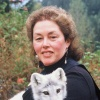 Kathleen Sheard with an Alaskan Arctic Fox (Photo by Laurel Adams)