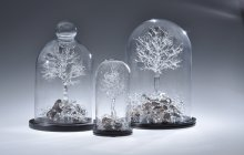 Three clear flameworked glass sculptures of trees under  clear glass domes