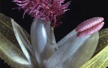 Botanical Wonders: The Story of the Harvard Glass Flowers