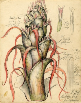 Botanical Wonders: Drawing from Nature