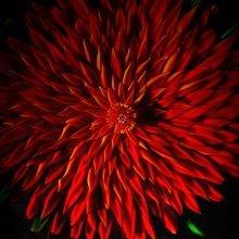 Red Dahlia by Debbie Tarsitano