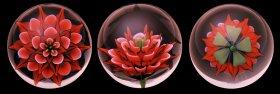 Orange Flower by John Kobuki