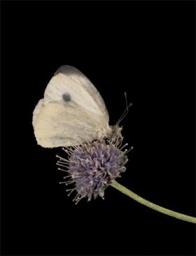 Botanical Wonders: In Your Garden