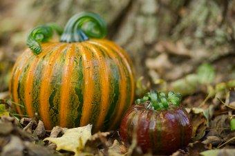 Pumpkins at The Glass Farmers Market