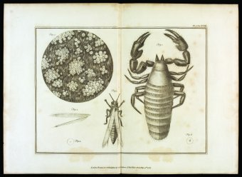 Plate XVIII from Volume 2 of Essays on the Microscope by George Adams; 2nd ed. with additions by Frederick Kanmacher. Printed by Dillon and Keating in London for the editor, 1798. CMGL 110118