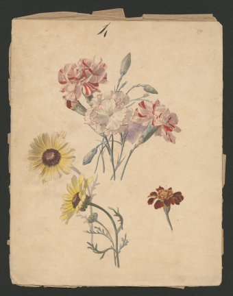 Daisy, Paul Nicholas, France, about 1897. Gift of the Fellows of The Corning Museum of Glass. (CMGL 139588, Collection of the Rakow Research Library of The Corning Museum of Glass).