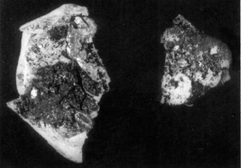 Fig. 3: Flat glass, with bitumenous(?) substance adhering. CMG 3752; Pb-I 146. Greatest dimension of piece on left = 1.96 cm.