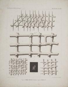 Farrea Haeckelii [art original]: Farrea Sp.