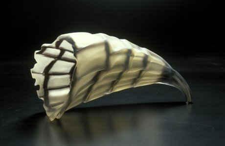 Ancient shell [slide].