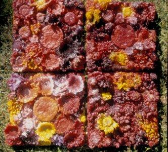 Infernal topographics #1 [slide].