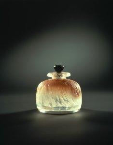 Pavot [transparency]