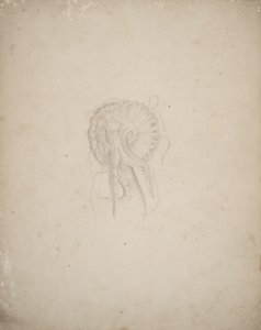 Pelagia noctiluca, [no. 235] [art original].