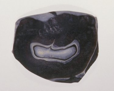 Fragment of Ribbed Bowl