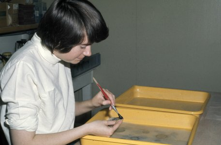 [Library volunteer brushing dirt from prints] [slide].