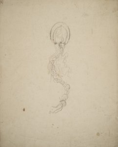 Sarsia siphonophora, no. 657 [art original].