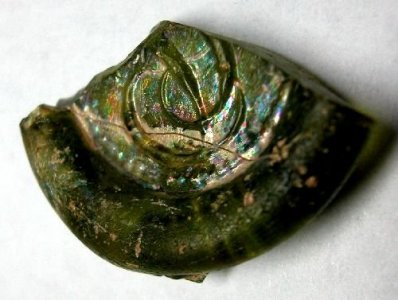 Fragment of a Seal