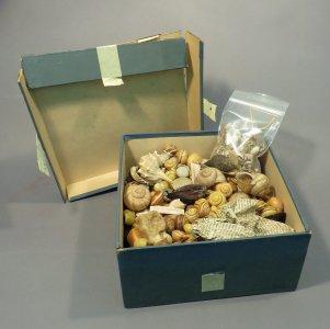 Box of ~550 Shells