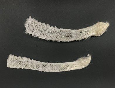 """2 """"Euplectella aspergillum"""" Sponge Skeletons"""