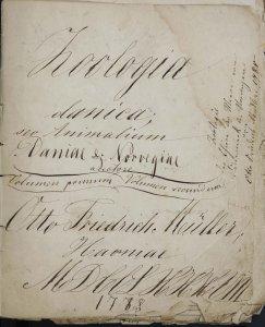 [Sketches of illustrations from] Zoologia danica: sev Animalium Daniae et Norvegiae, Volumen primum, Volumen secundum, austore Otto Friedrich Müller.