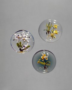 Cymbidium orchid; compound phalenopsis orchid; catteleya orchid [picture].
