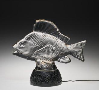 Gros poissons, algues (Big fish, algae)