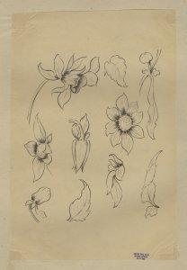 [Drawing of various flowers and leaves] [art original].