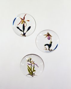 Brassi diorii stylized orchid; moccasin flower; pink lady's slipper; paphiopedilum orchid [picture].