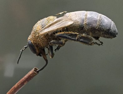 Model of a Bee