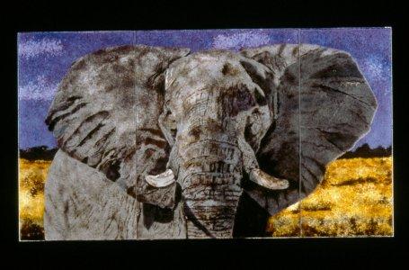Loxodonta africana- majestic delta mystery [slide].