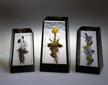 Indian pipes botanical; hawkweed botanical; chicory botanical with honeybees [picture].