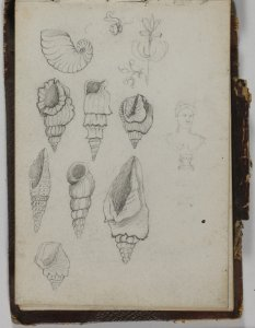 [Small brown sketchbook], 1882 / F. Carder.