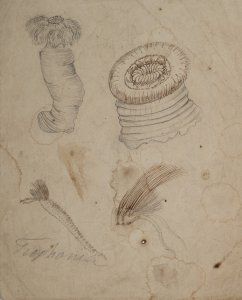 Trophonia [art original].