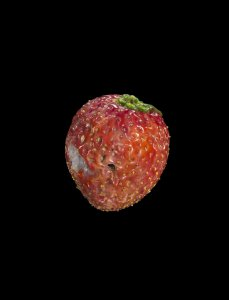 Model of a Strawberry