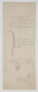 Helix pomatia anatomie [art original].