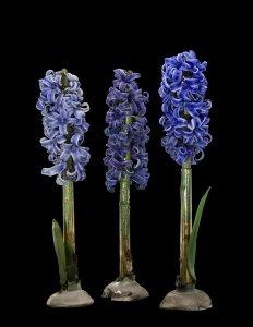 3 Hyacinth Models