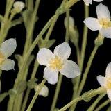 Botanical Wonders (Podcast)