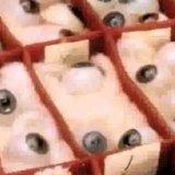 Blaschka Eyes