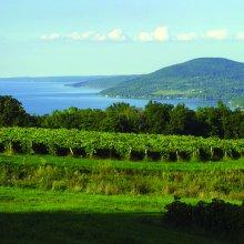 Finger Lakes Wine Grapes