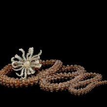 Specimen of Blaschka Marine Life: Synapta glabra (Nr. 284), Leopold and Rudolf Blaschka, Dresden Germany, 1885. Lent by Cornell University, Department of Ecology and Evolutionary Biology. L.17.3.63-20.