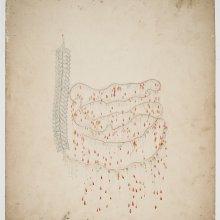 Design Drawing of Halistemma rubrum, no. 208, Leopold and Rudolf Blaschka, Dresden Germany, 1863-1890. CMGL 122344.